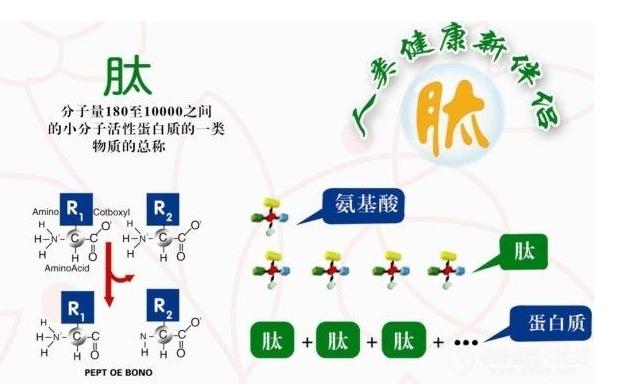 肽的种类 按分子量大小分类_肽度科技