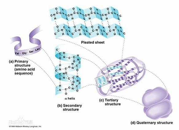 肽键的定义及其分子表达式说明
