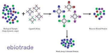 蛋白质的分离方法之——根据特异性与带电性