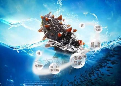 海参肽的功效和作用