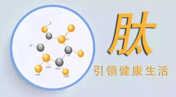 肽在营养学上的作用