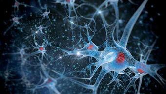 神经多肽——与智商相关的一种大脑中的肽