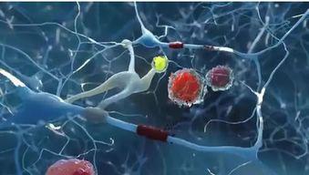 肽对于人体系统与器官的作用