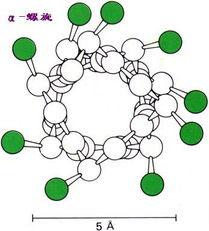 肽键的本质与小肽的物理性质2