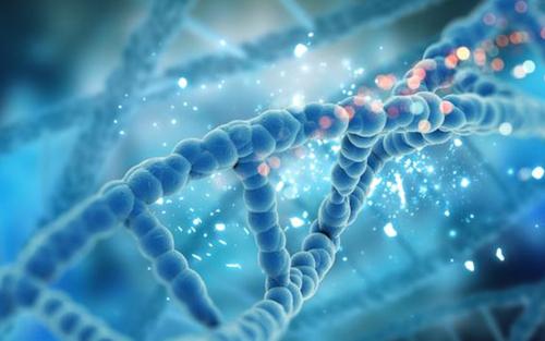 小分子肽的大作用你知道吗?