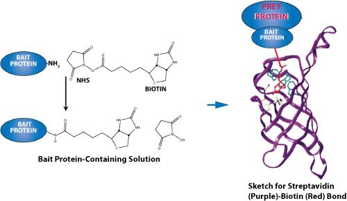 生命的起源及多肽的分析研究