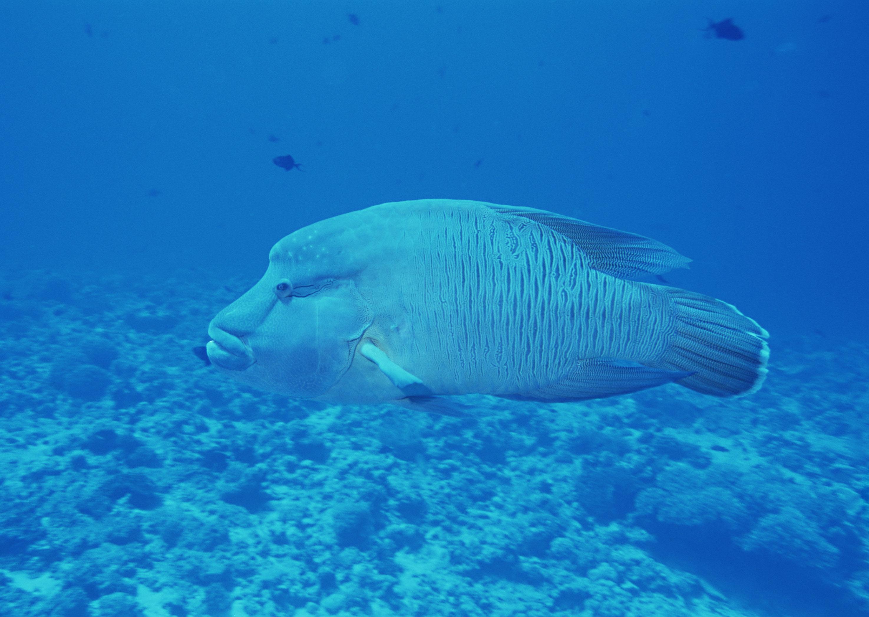 鱼胶原蛋白肽的腥味可以代表胶原蛋白肽的品质吗?1
