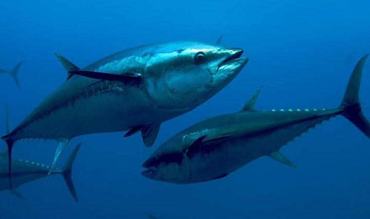 鱼胶原蛋白肽的腥味可以代表胶原蛋白肽的品质吗?2
