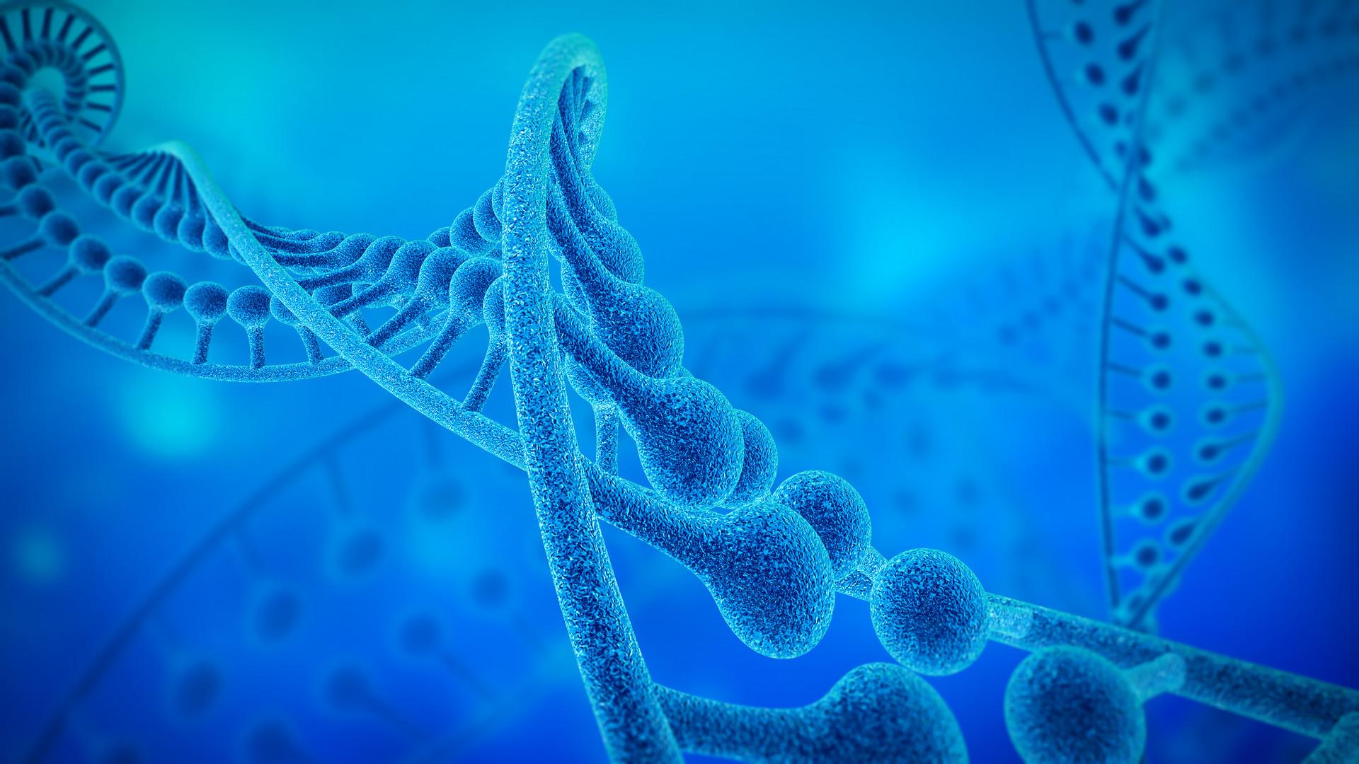 小分子肽进入机体中有什么作用?又是怎么被吸收的?1