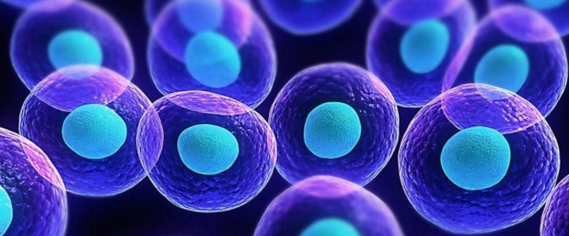 小分子活性肽最基础的作用是什么?2