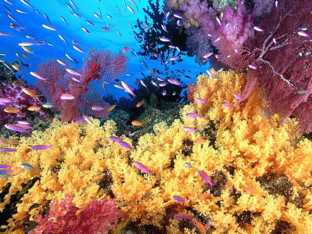 肽的分类:从海洋活性生物肽的角度出发2