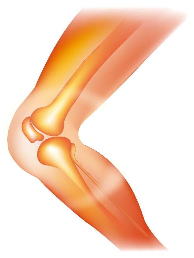 骨胶原蛋白肽如何补充