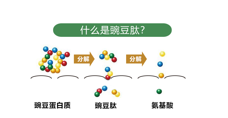 豌豆肽_03.jpg